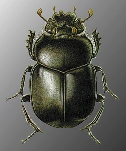 Рассказ о жуке скарабее