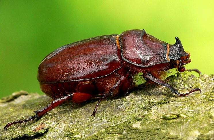 Реферат по биологии 8 класс жуки