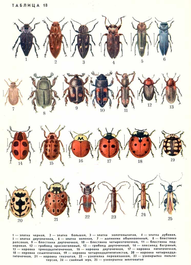 фото с насекомыми название