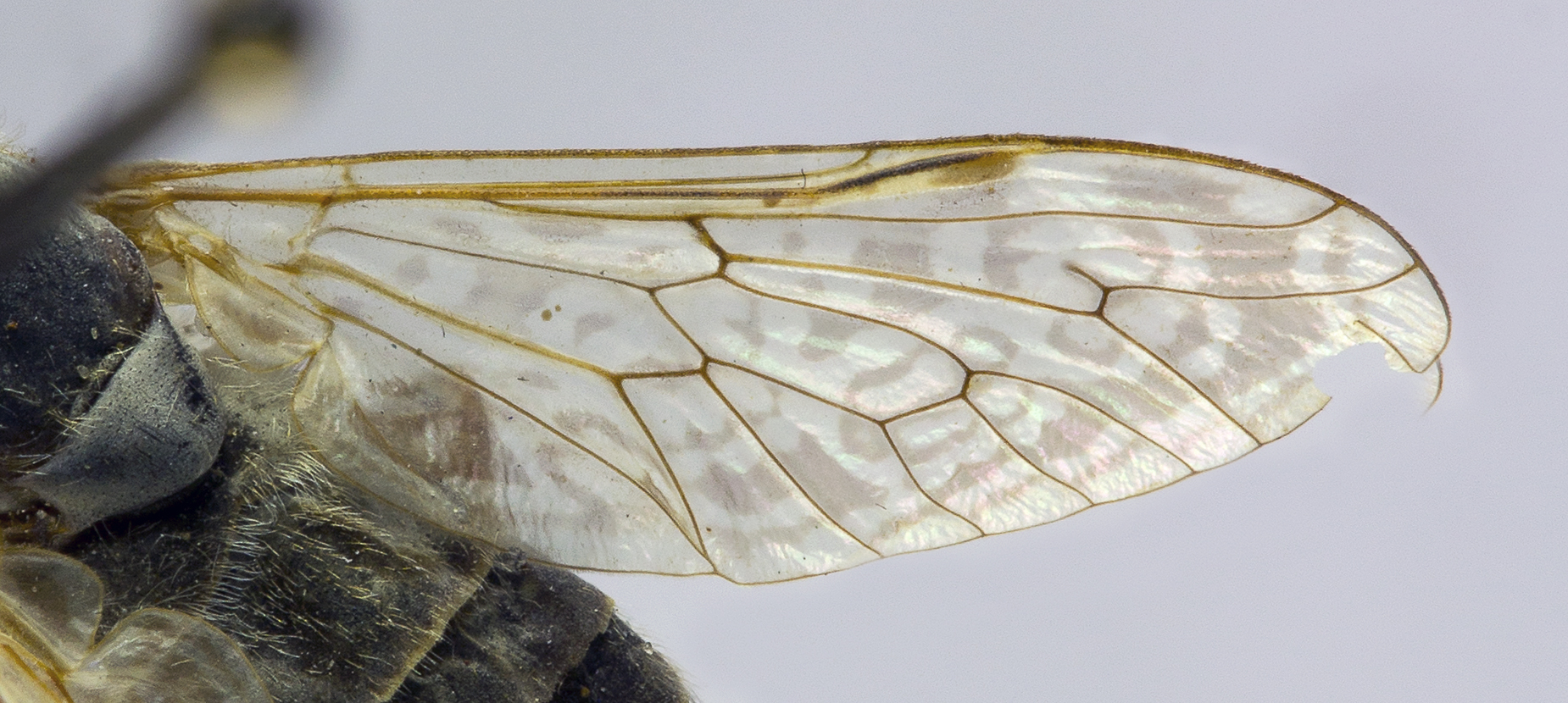 Картинка крылья мухи