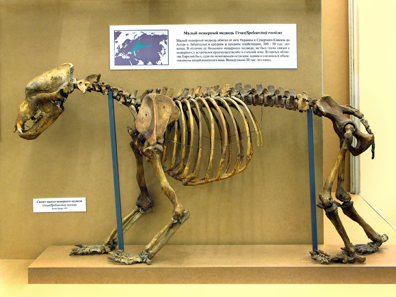 отличием нанесении скелет медведя фото сотворения безупречного завершенного