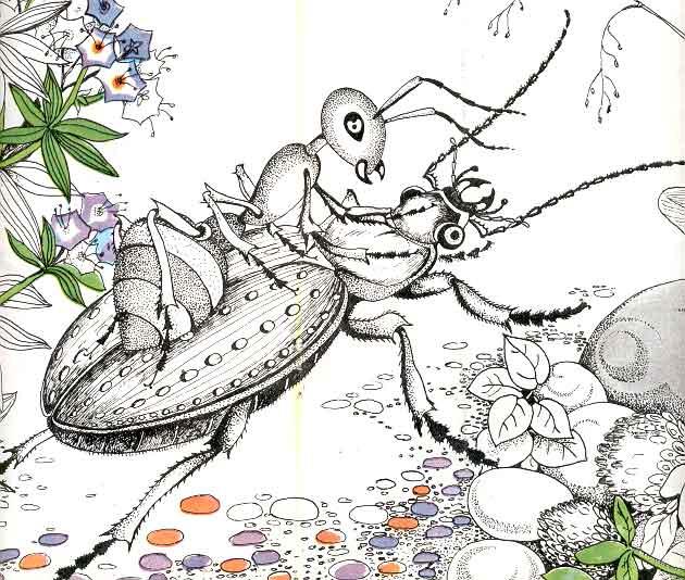 бианки приключения муравьишки картинки
