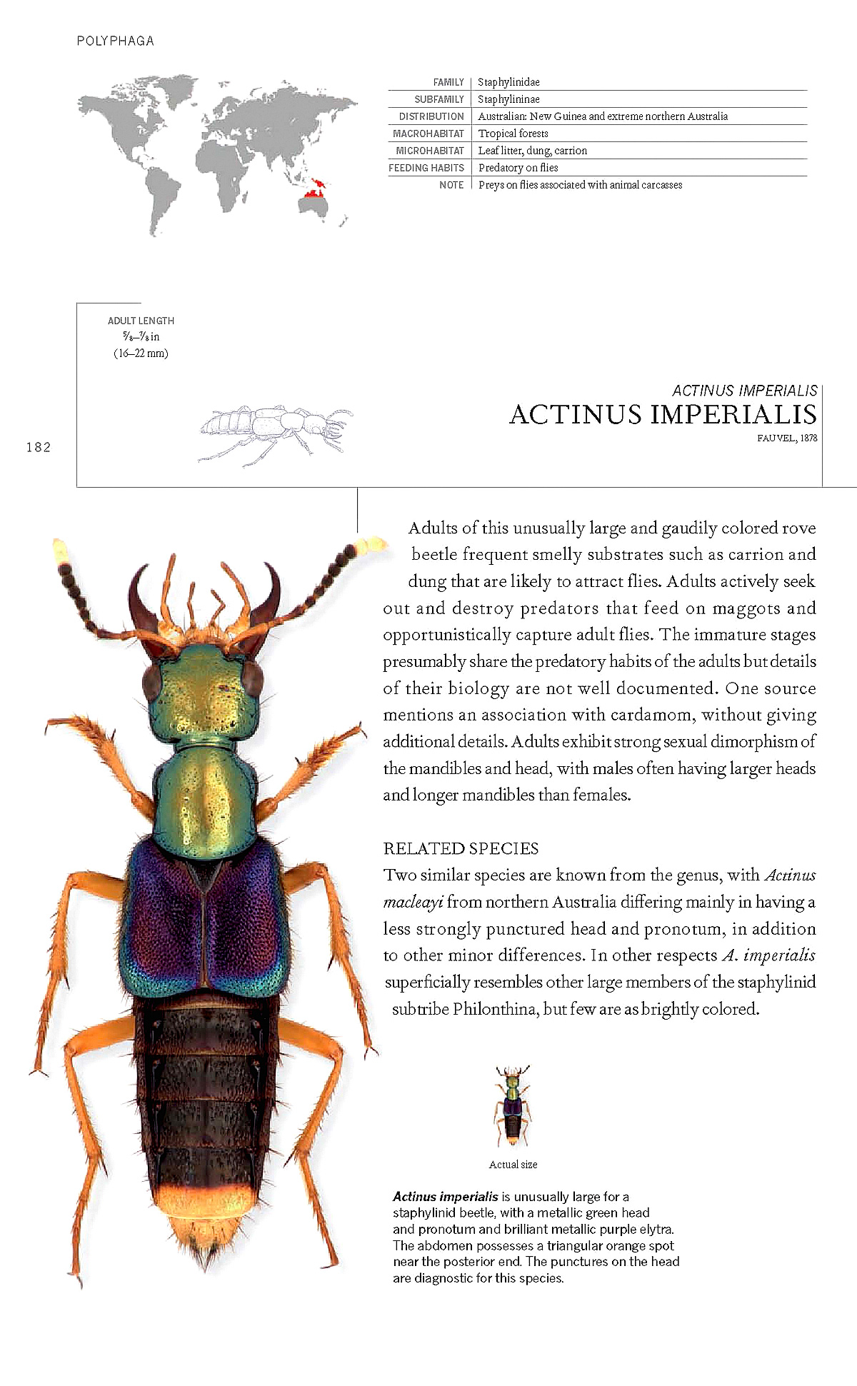Výsledek obrázku pro The Book of Beetles: A Life-Sized Guide to Six Hundred of Nature's Gems
