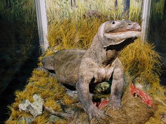 Билетов стоимость музей часы зоологический работы стоимости расчет затрат человеко часах по